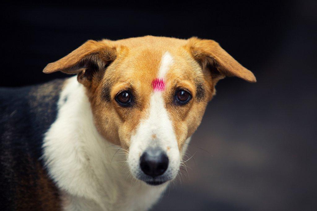 गणेश चतुर्थी Little India